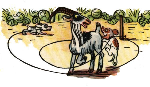 Не ходи козел в огород - Сутеев В.Г. История в картинках.