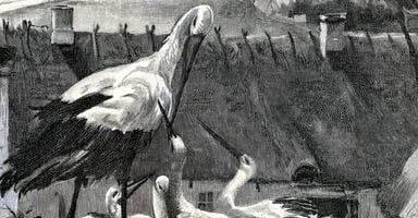 Сказка Аисты — Ганс Христиан Андерсен. Читать онлайн.