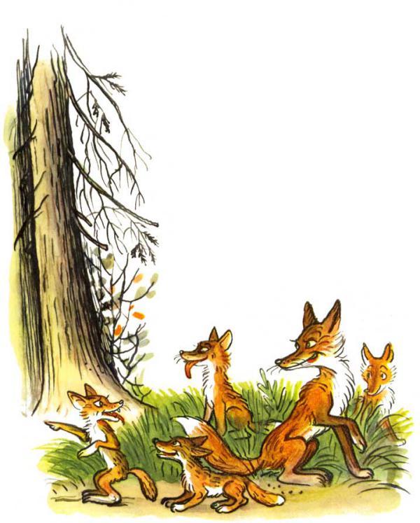 Сказка Петух и краски - Сутеев В.Г. С иллюстрациями автора.