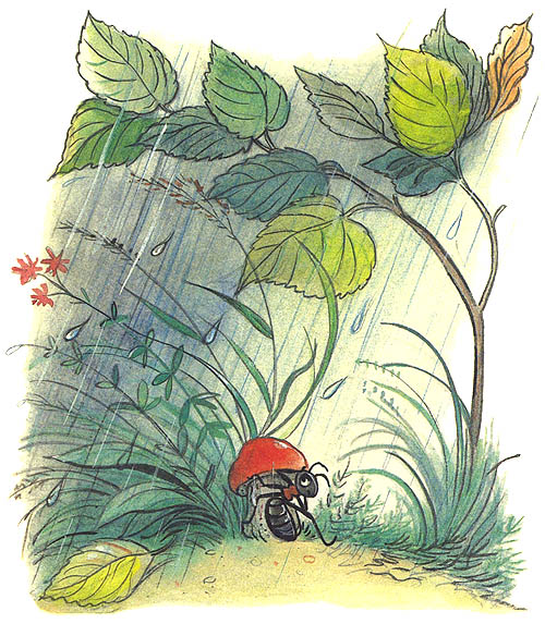 Сказки сутеева под грибом с картинками