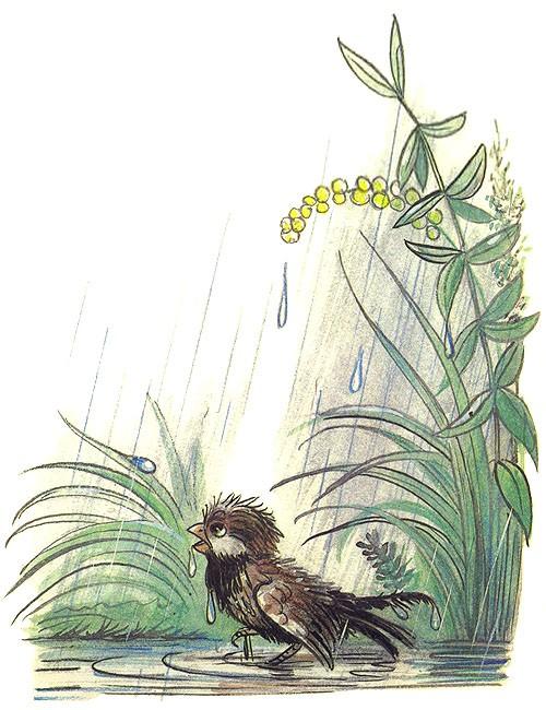 Сказка Под грибом - Сутеев В.Г. С иллюстрациями автора.
