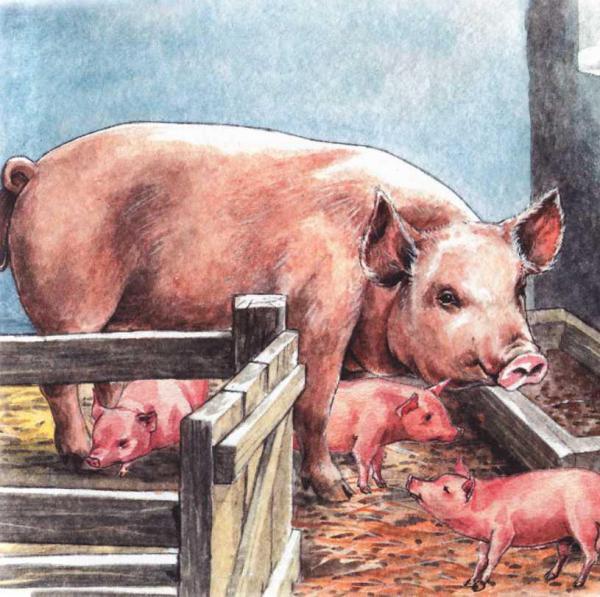 Свинья-сестра - русская народная сказка