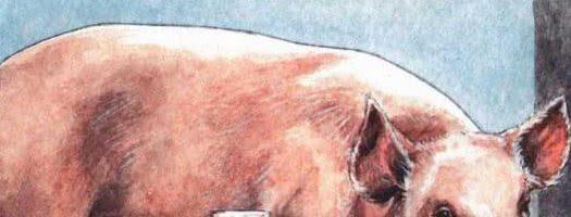 Свинья-сестра — русская народная сказка 0 (0)