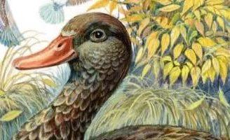 Анюткина утка — Бианки В.В. Рассказ про девочку Анютку и ее заботу о раненой уточке.