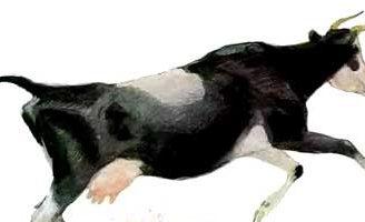 Бодливая корова — Ушинский К.Д. Читать онлайн с картинками.
