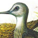 Чей нос лучше - Бианки В.В. Сказка о том, как каждая птица свой нос расхваливала.