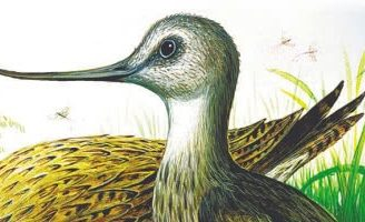 Чей нос лучше — Бианки В.В. Сказка о том, как каждая птица свой нос расхваливала.