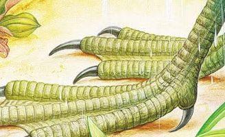 Чьи это ноги — Бианки В.В. Сказка про жаворонка и птичьи ноги.