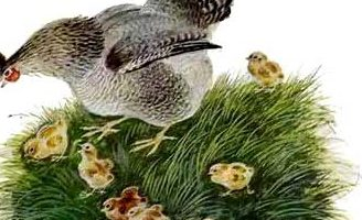 Чужое яичко — Ушинский К.Д. Читать онлайн с картинками. 4.5 (4)