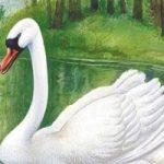 Глаза и уши - Бианки В.В. Сказка про спор бобра с лебедем, что в лесу важнее