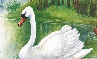 Глаза и уши — Бианки В.В. Сказка про спор бобра с лебедем, что в лесу важнее