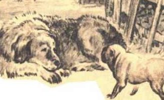 Играющие собаки — Ушинский К.Д. Читать рассказ онлайн.