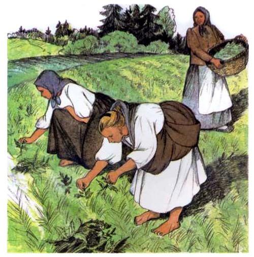 Как рубашка в поле выросла - Ушинский К.Д.