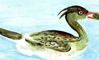 Люля — Бианки В.В. Сказка о птичке Люле, которая помогла всем животным.