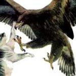 Орёл и кошка - Ушинский К.Д. Читать онлайн с картинками.