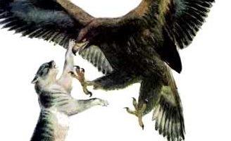 Орёл и кошка — Ушинский К.Д. Читать онлайн с картинками.