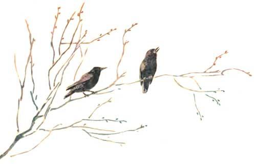 Птичьи домики - Пермяк Е.А.