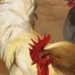 Птичьи разговоры - Бианки В.В. Сказка про то, о чем разговаривают птицы и животные.