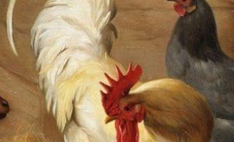 Птичьи разговоры — Бианки В.В. Сказка про то, о чем разговаривают птицы и животные.