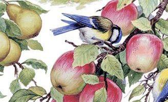Птицы — Ушинский К.Д. Читать рассказ о птицах онлайн.