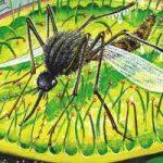 Росянка - комариная смерть - Бианки В.В. Сказка про храброго, но глупого комарика.