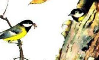 Синичкин календарь — Бианки В.В. Синичка наблюдает за жизнью в лесу в разные месяцы года.