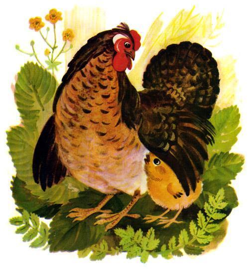 курочка и цыпленок