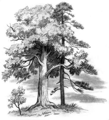 Спор деревьев - Ушинский К.Д.