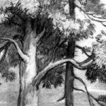 Спор деревьев - Ушинский К.Д. Читать рассказ онлайн.