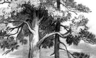 Спор деревьев — Ушинский К.Д. Читать рассказ онлайн.