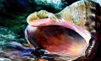 Стихотворение Раковина — Агния Барто. Читайте онлайн.