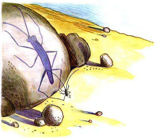 усатый таракан