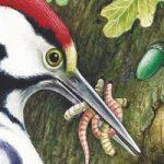 Теремок - Бианки В.В. Сказка про то, как в дупле жили птицы и животные.