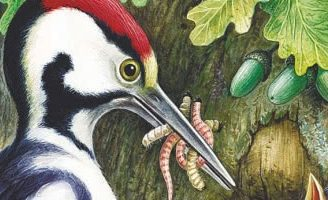 Теремок — Бианки В.В. Сказка про то, как в дупле жили птицы и животные.