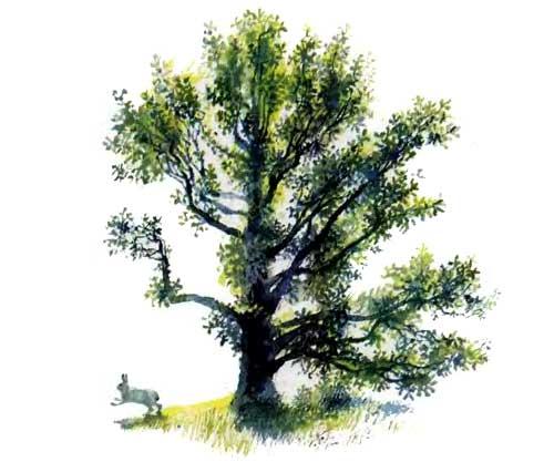 В лесу летом - Ушинский К.Д.