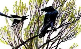 Ворон и сорока — Ушинский К.Д. Читать онлайн с картинками.