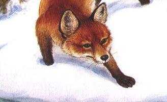 Хитрый Лис и умная Уточка — Бианки В.В.Сказка про то, как Лис на Уточку охотился. 5 (1)