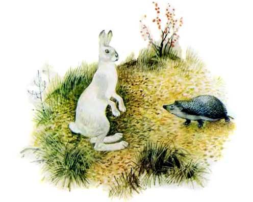 Заяц и еж - Ушинский К.Д.