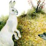Заяц и еж - Ушинский К.Д. Читать онлайн с картинками.