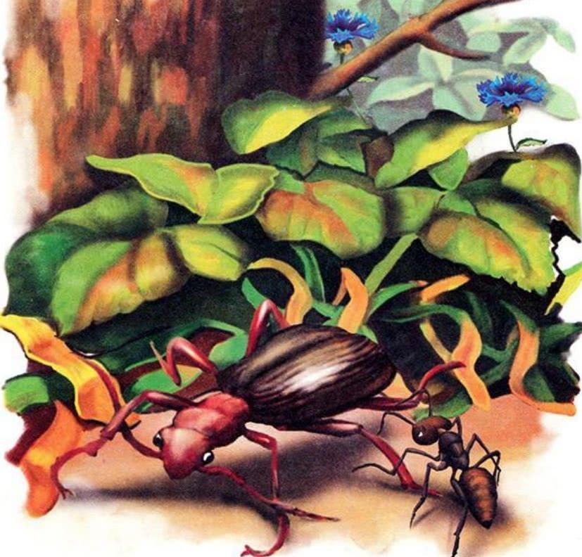 Как муравьишка домой спешил - Бианки В.В.