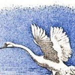 Лебеди - Толстой Л.Н. Рассказ про молодого лебедя, отставшего от стаи.