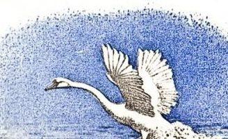Лебеди — Толстой Л.Н. Рассказ про молодого лебедя, отставшего от стаи. 5 (1)