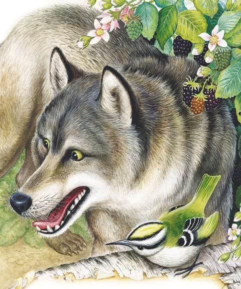 Лесной колобок - колючий бок - Бианки В.В.