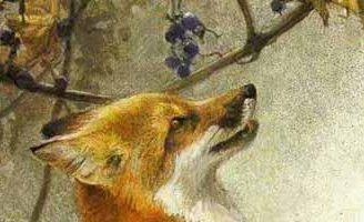 Лисица и виноград — Толстой Л.Н. Басня как лисица хотела виноград.