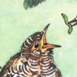 Маленькие рассказы: Подкидыш - Бианки В.В. Автор покинул осиротевшее яйцо каменки в гнездо пеночки и она выкормила подкидыша.