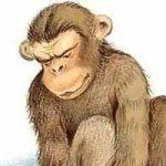 Обезьяна и горох - Толстой Л.Н. Басня про обезьяну, несшую горох.
