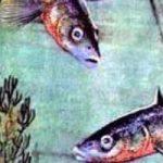 Рыбий дом - Бианки В.В. Рассказ про рыбку, которая строила себе дом.