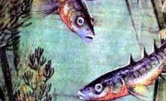 Рыбий дом — Бианки В.В. Рассказ про рыбку, которая строила себе дом.