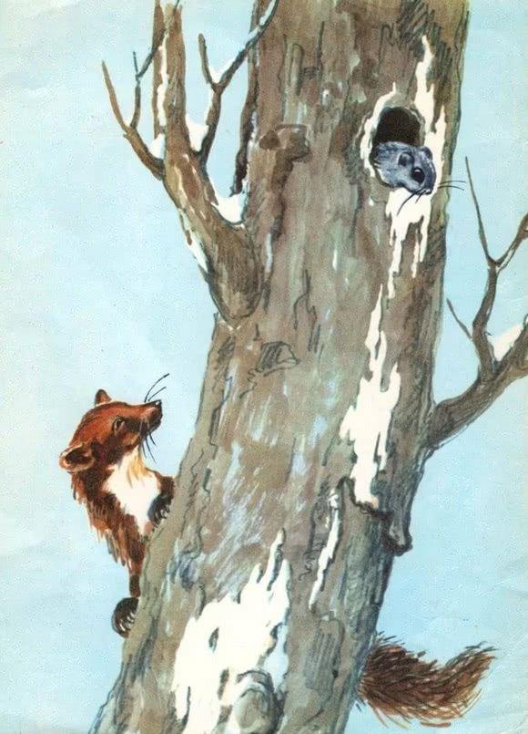 Маленькие рассказы: Голубой зверек - Бианки В.В.