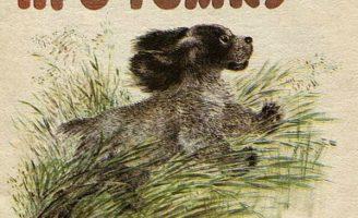 Про Томку — Е. Чарушин рассказы про собаку